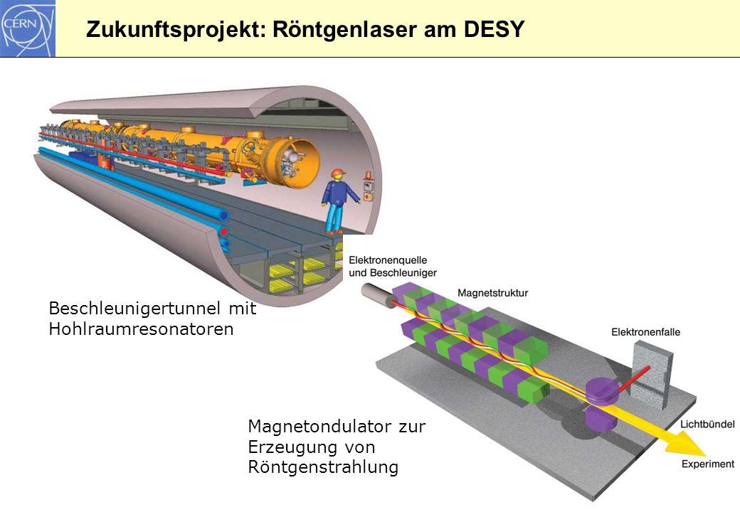 24 Zukunftsprojekt: Röntgenlaser am DESY Beschleunigertunnel mit Hohlraumresonatoren Magnetondulator zur Erzeugung von Röntgenstrahlung
