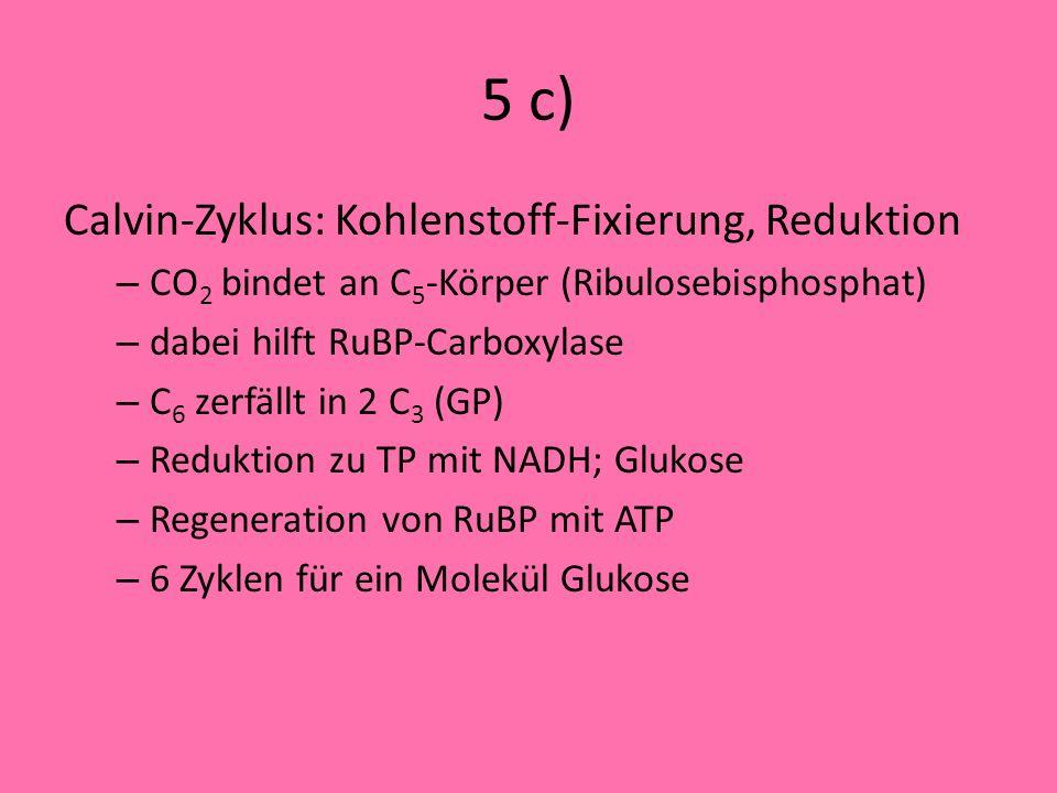 5 b) kompetitiv: – Hemmungsmolekül (ähnlich dem Substrat) bindet an die Wirkstelle, – Beispiel: Hemmung von Bernsteinsäure nicht kompetitiv – Hemmungs