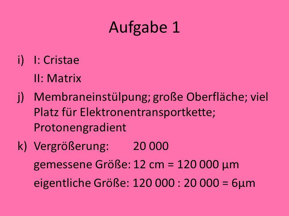 Aufgabe 1 i)I: Cristae II: Matrix j)Membraneinstülpung; große Oberfläche; viel Platz für Elektronentransportkette; Protonengradient k)Vergrößerung: 20 000 gemessene Größe:12 cm = 120 000 µm eigentliche Größe: 120 000 : 20 000 = 6µm