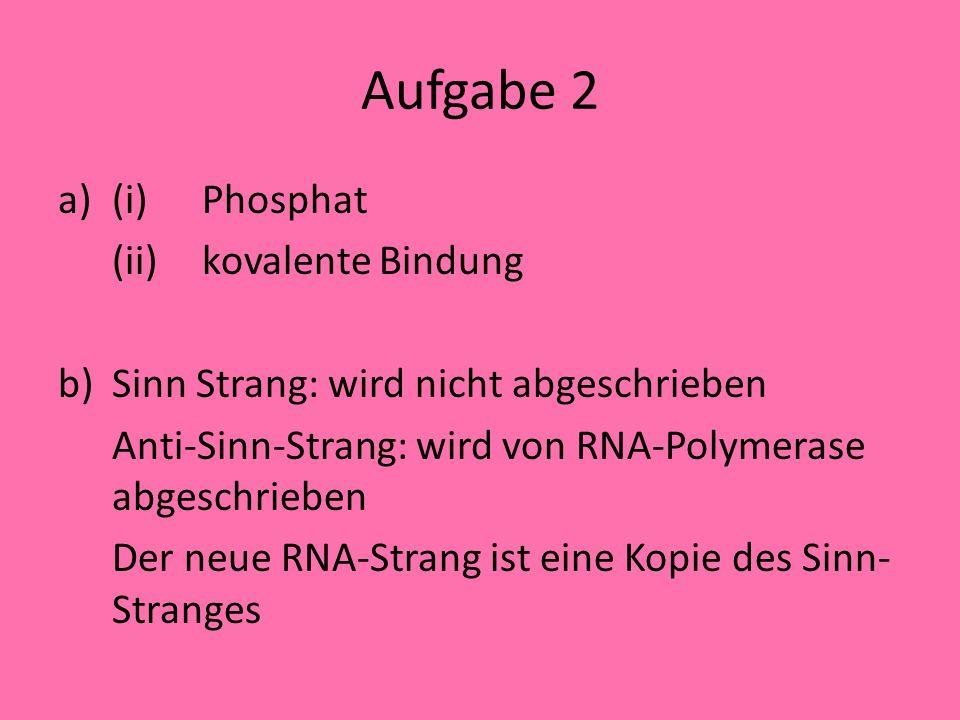 Aufgabe 2 a)(i)Phosphat (ii)kovalente Bindung b)Sinn Strang: wird nicht abgeschrieben Anti-Sinn-Strang: wird von RNA-Polymerase abgeschrieben Der neue RNA-Strang ist eine Kopie des Sinn- Stranges