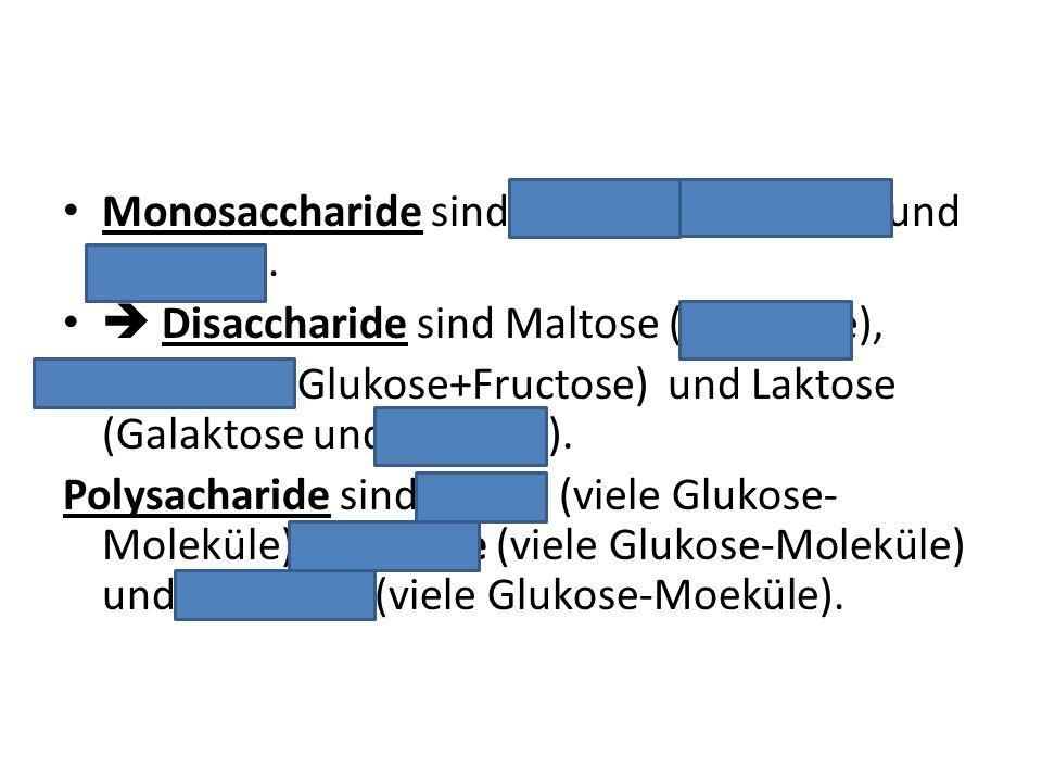 Monosaccharide sind Glukose, Galaktose und Fruktose. Disaccharide sind Maltose (2Glukose), Saccharose (Glukose+Fructose) und Laktose (Galaktose und Gl
