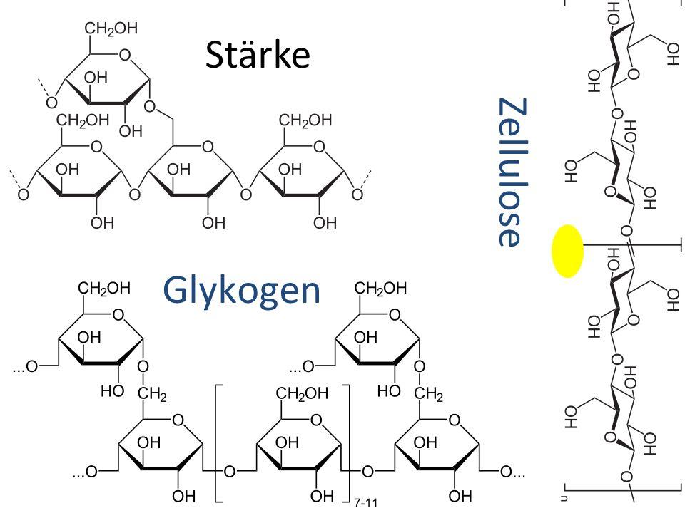 Stärke Glykogen Zellulose
