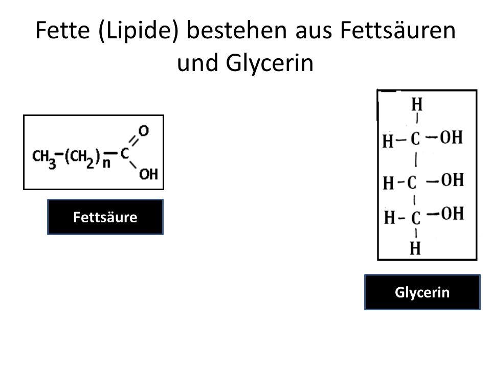 Fette (Lipide) bestehen aus Fettsäuren und Glycerin Fettsäure Glycerin