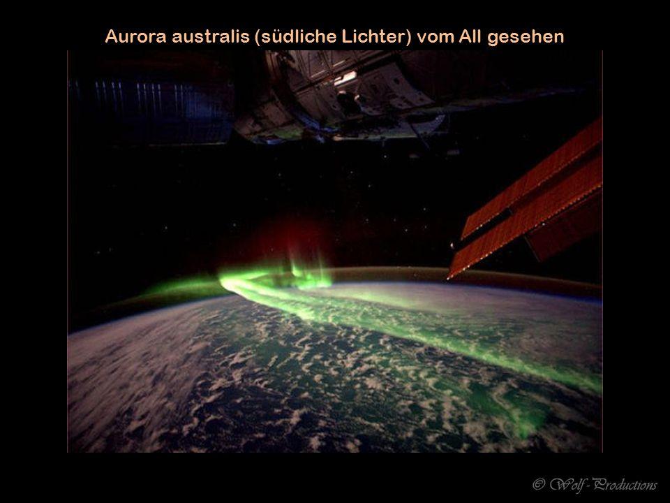 ...atemberaubende grüne Weinrebe-Schlange