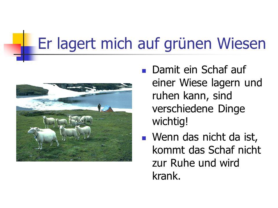 Er lagert mich auf grünen Wiesen Damit ein Schaf auf einer Wiese lagern und ruhen kann, sind verschiedene Dinge wichtig! Wenn das nicht da ist, kommt