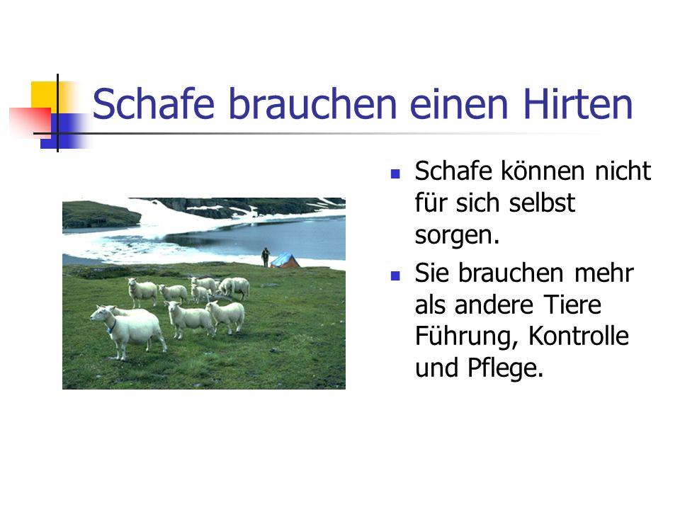 Schafe brauchen einen Hirten Schafe können nicht für sich selbst sorgen. Sie brauchen mehr als andere Tiere Führung, Kontrolle und Pflege.