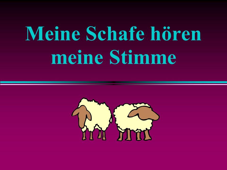 Meine Schafe hören meine Stimme