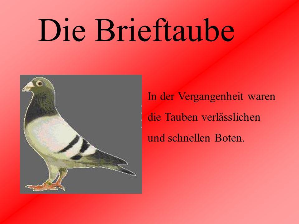 Die Brieftaube In der Vergangenheit waren die Tauben verlässlichen und schnellen Boten.