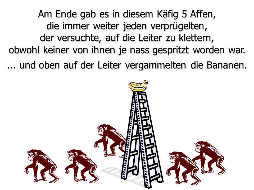 Am Ende gab es in diesem Käfig 5 Affen, die immer weiter jeden verprügelten, der versuchte, auf die Leiter zu klettern,... und oben auf der Leiter ver