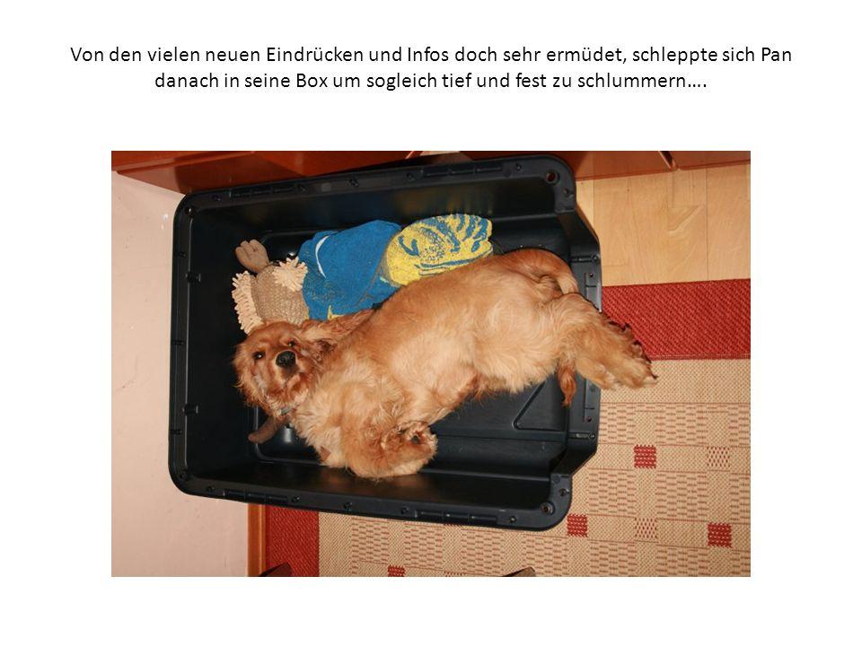Von den vielen neuen Eindrücken und Infos doch sehr ermüdet, schleppte sich Pan danach in seine Box um sogleich tief und fest zu schlummern….