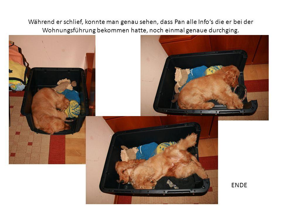 Während er schlief, konnte man genau sehen, dass Pan alle Infos die er bei der Wohnungsführung bekommen hatte, noch einmal genaue durchging.