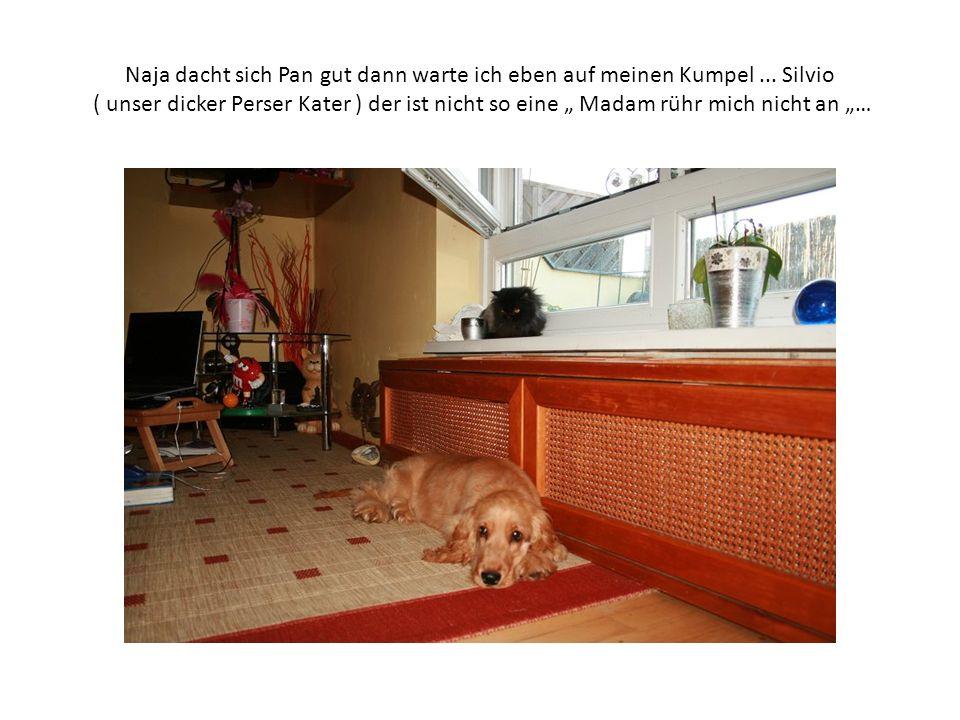 Nachdem sich Silvio, nach seinem ausgiebigen Frühstück, dann zu den beiden gesellt hatte, begann Pan sogleich ihn höflich um eine Wohnungsführung zu bitten.
