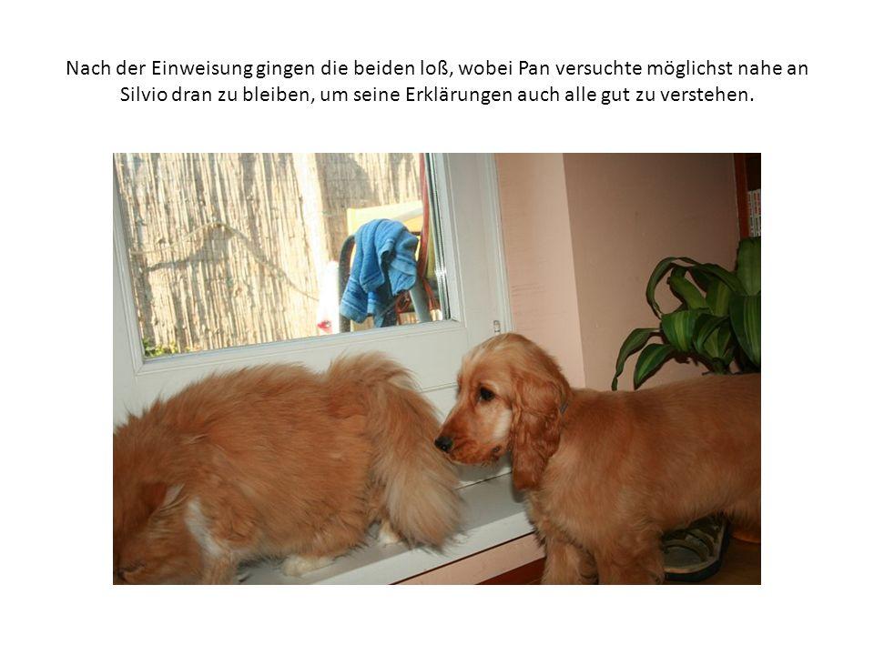 Nachdem Pan, wie das bei Hunden eben so ist, immer an allem schnüffeln muß, dachte sich Silvio..