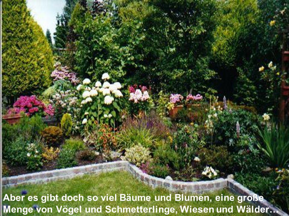 Aber es gibt doch so viel Bäume und Blumen, eine große Menge von Vögel und Schmetterlinge, Wiesen und Wälder…