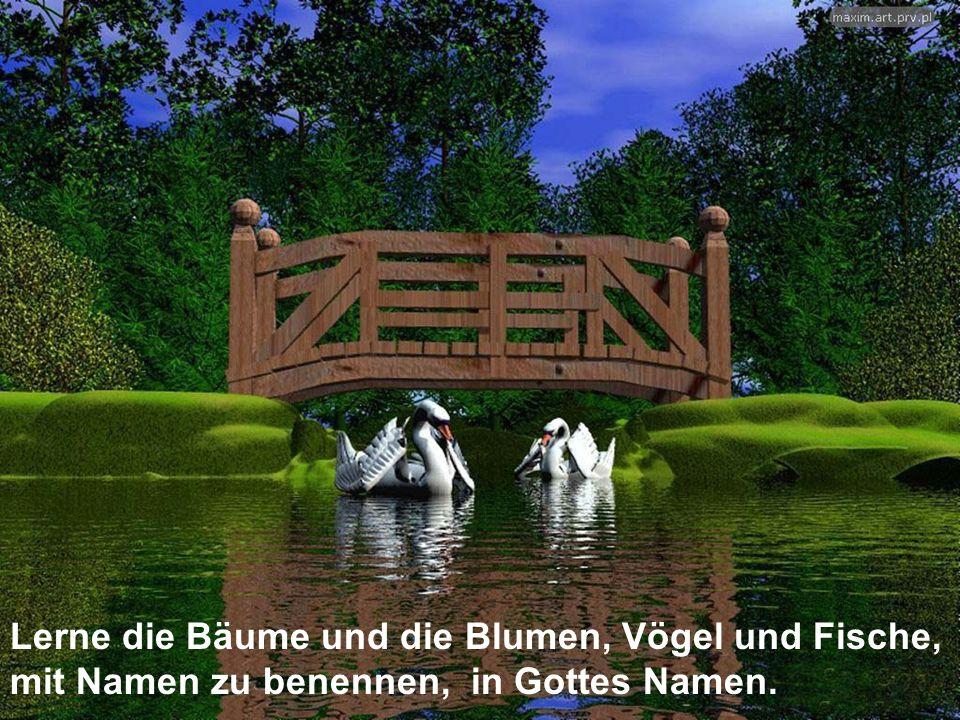 Lerne die Bäume und die Blumen, Vögel und Fische, mit Namen zu benennen, in Gottes Namen.