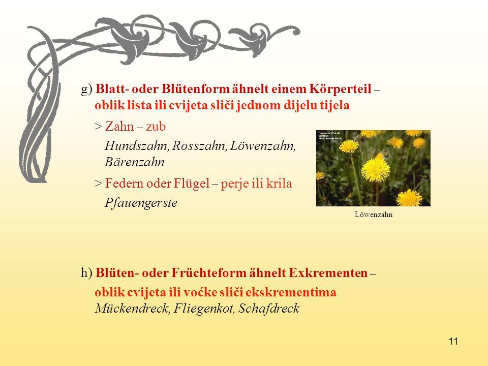 11 g) Blatt- oder Blütenform ähnelt einem Körperteil – oblik lista ili cvijeta sliči jednom dijelu tijela > Zahn – zub Hundszahn, Rosszahn, Löwenzahn,