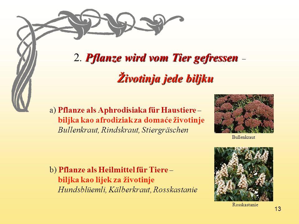 13 2.Pflanze wird vom Tier gefressen 2. Pflanze wird vom Tier gefressen – Životinja jede biljku Životinja jede biljku a) Pflanze als Aphrodisiaka für