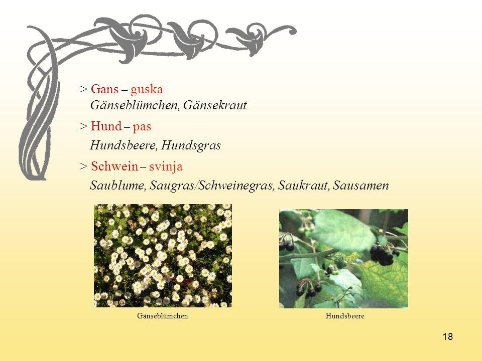 18 > Gans – guska Gänseblümchen, Gänsekraut > Hund – pas Hundsbeere, Hundsgras > Schwein – svinja Saublume, Saugras/Schweinegras, Saukraut, Sausamen G