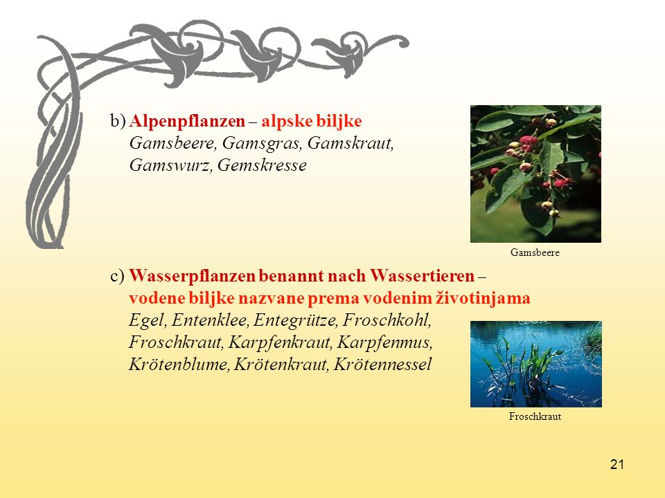 21 b) Alpenpflanzen – alpske biljke Gamsbeere, Gamsgras, Gamskraut, Gamswurz, Gemskresse c) Wasserpflanzen benannt nach Wassertieren – vodene biljke n