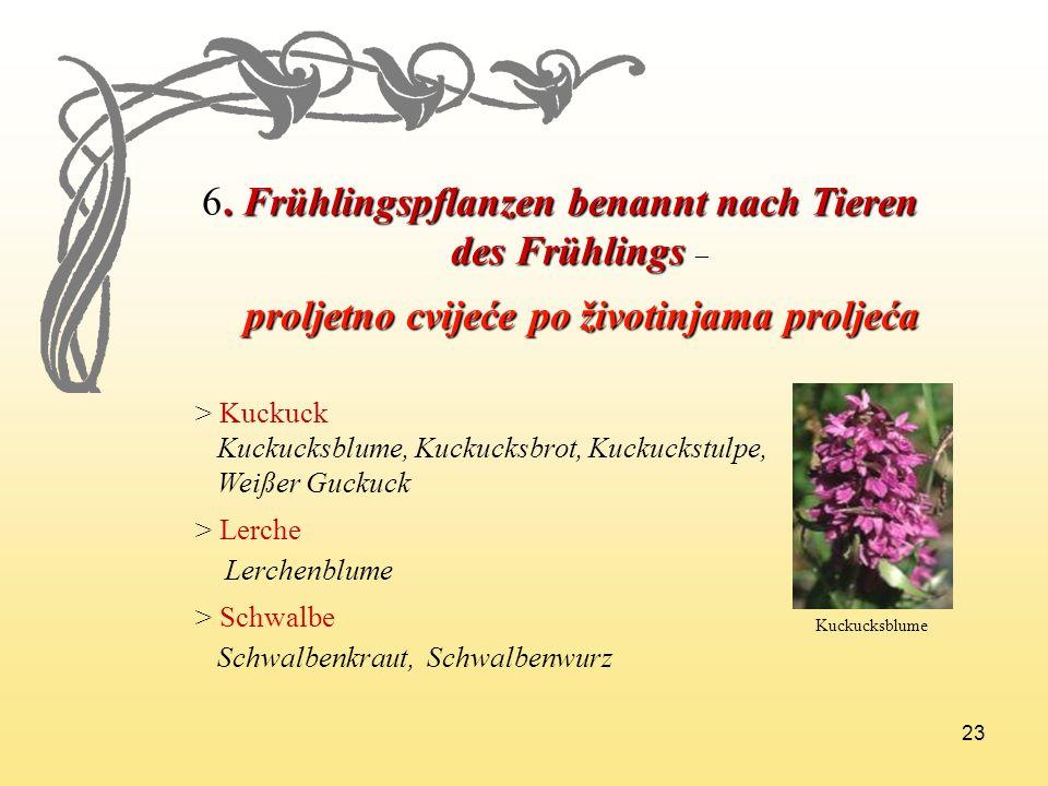 23 6. Frühlingspflanzen benannt nach Tieren des Frühlings des Frühlings – proljetno cvijeće po životinjama proljeća proljetno cvijeće po životinjama p