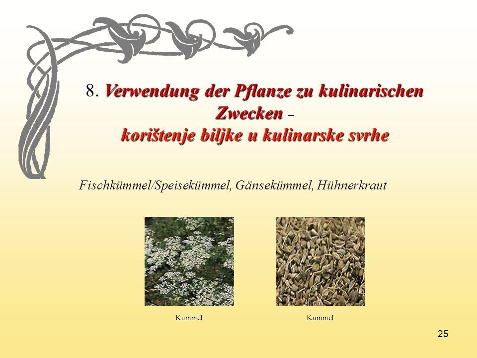 25 8. Verwendung der Pflanze zu kulinarischen Zwecken 8. Verwendung der Pflanze zu kulinarischen Zwecken – korištenje biljke u kulinarske svrhe Fischk