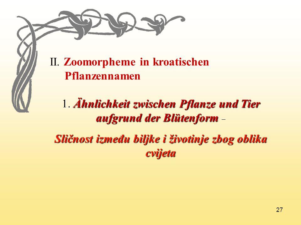 27 II. Zoomorpheme in kroatischen Pflanzennamen 1. Ähnlichkeit zwischen Pflanze und Tier aufgrund der Blütenform 1. Ähnlichkeit zwischen Pflanze und T