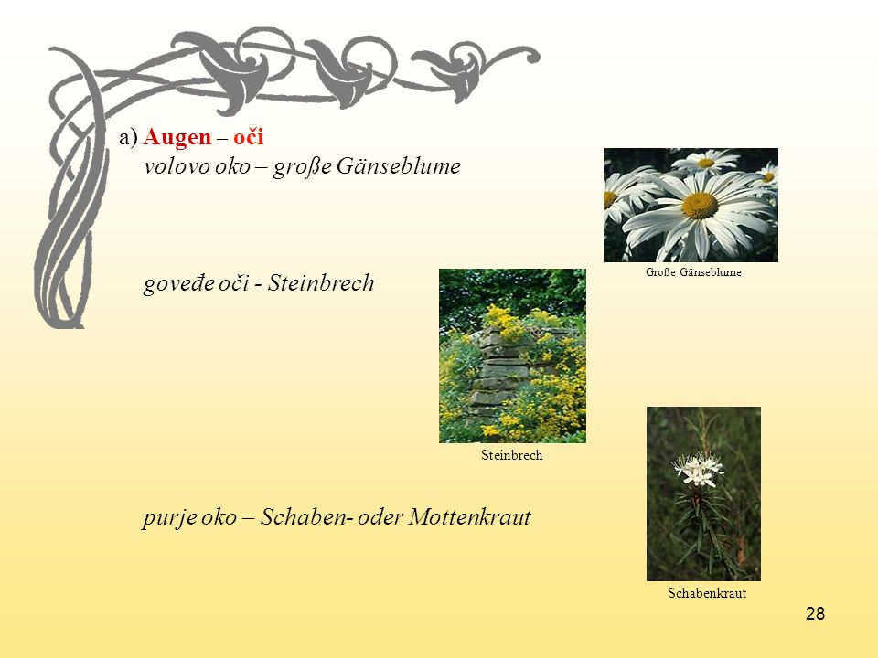 28 a) Augen – oči volovo oko – große Gänseblume goveđe oči - Steinbrech purje oko – Schaben- oder Mottenkraut Große Gänseblume Steinbrech Schabenkraut