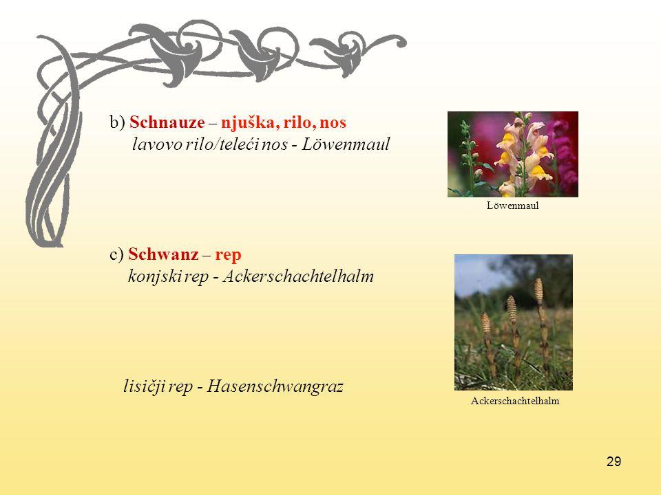 29 b) Schnauze – njuška, rilo, nos lavovo rilo/teleći nos - Löwenmaul c) Schwanz – rep konjski rep - Ackerschachtelhalm lisičji rep - Hasenschwangraz