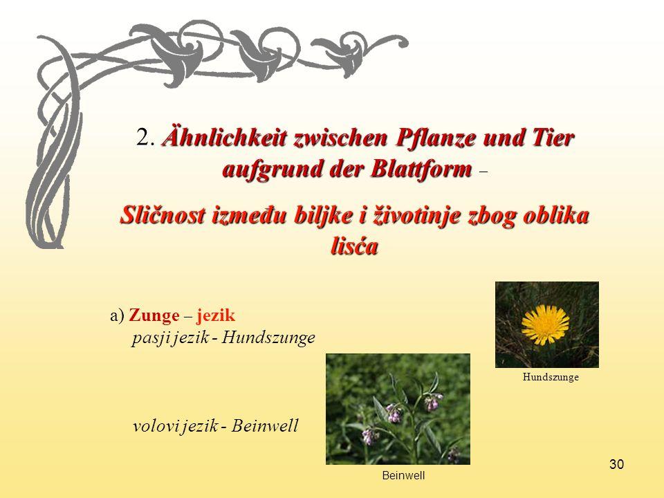 30 2. Ähnlichkeit zwischen Pflanze und Tier aufgrund der Blattform 2. Ähnlichkeit zwischen Pflanze und Tier aufgrund der Blattform – Sličnost između b