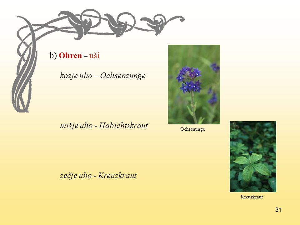 31 b) Ohren – uši kozje uho – Ochsenzunge mišje uho - Habichtskraut zečje uho - Kreuzkraut Ochsenunge Kreuzkraut