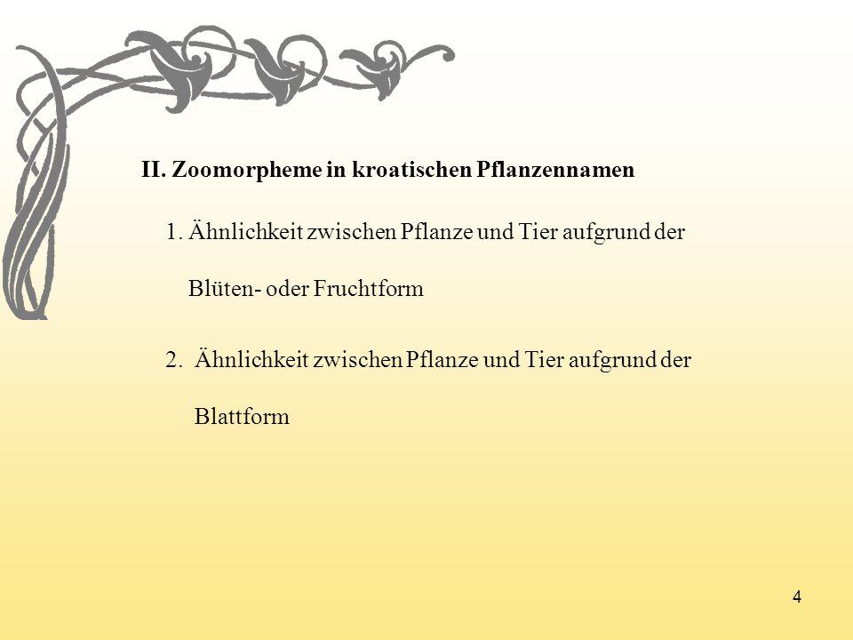 4 II. Zoomorpheme in kroatischen Pflanzennamen 1. Ähnlichkeit zwischen Pflanze und Tier aufgrund der Blüten- oder Fruchtform 2. Ähnlichkeit zwischen P
