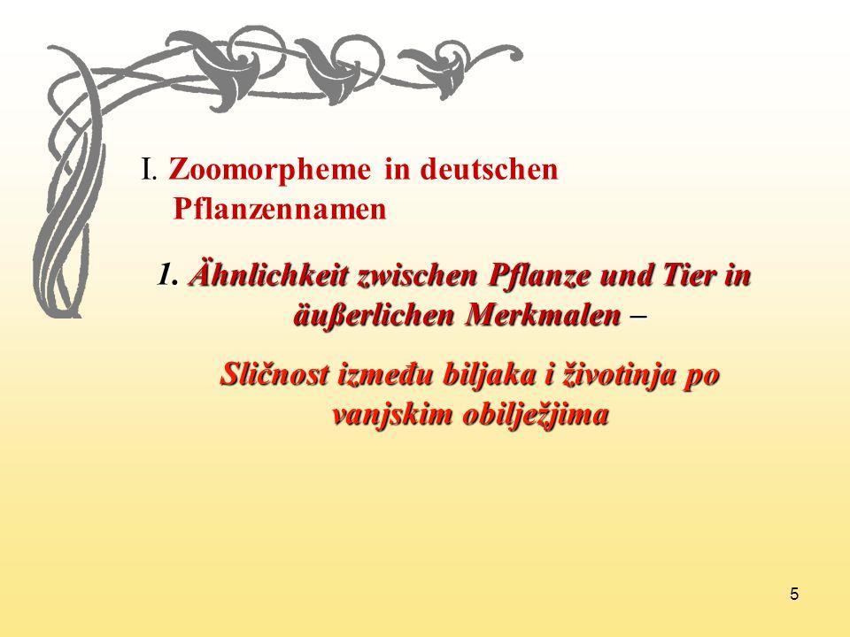 5 I. Zoomorpheme in deutschen Pflanzennamen 1. Ähnlichkeit zwischen Pflanze und Tier in äußerlichen Merkmalen – Sličnost između biljaka i životinja po