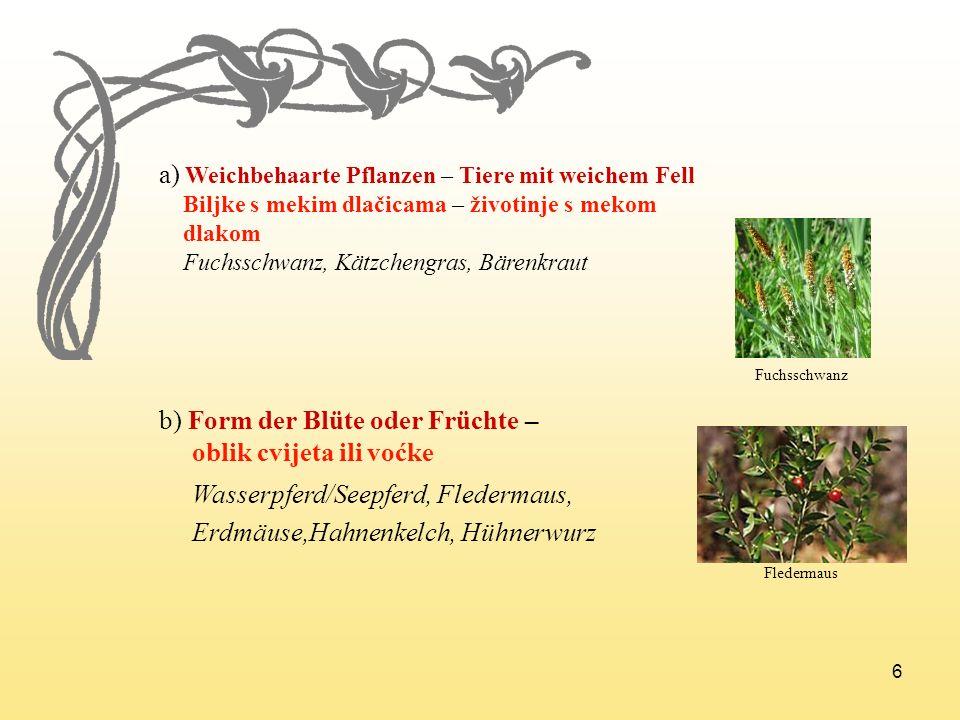 6 a) Weichbehaarte Pflanzen – Tiere mit weichem Fell Biljke s mekim dlačicama – životinje s mekom dlakom Fuchsschwanz, Kätzchengras, Bärenkraut b) For