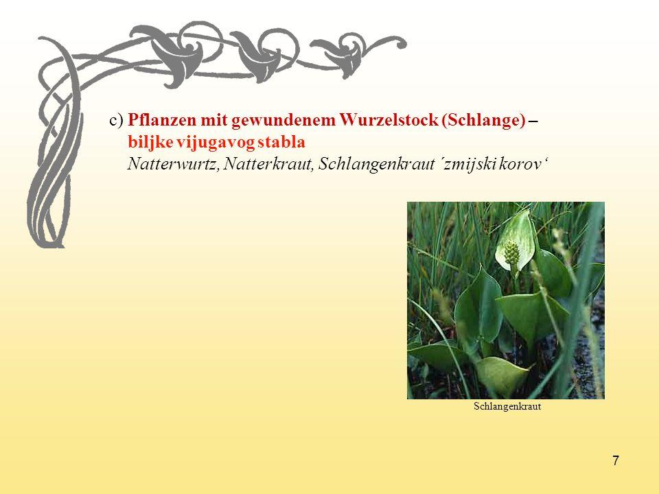 7 c) Pflanzen mit gewundenem Wurzelstock (Schlange) – biljke vijugavog stabla Natterwurtz, Natterkraut, Schlangenkraut ´zmijski korov Schlangenkraut