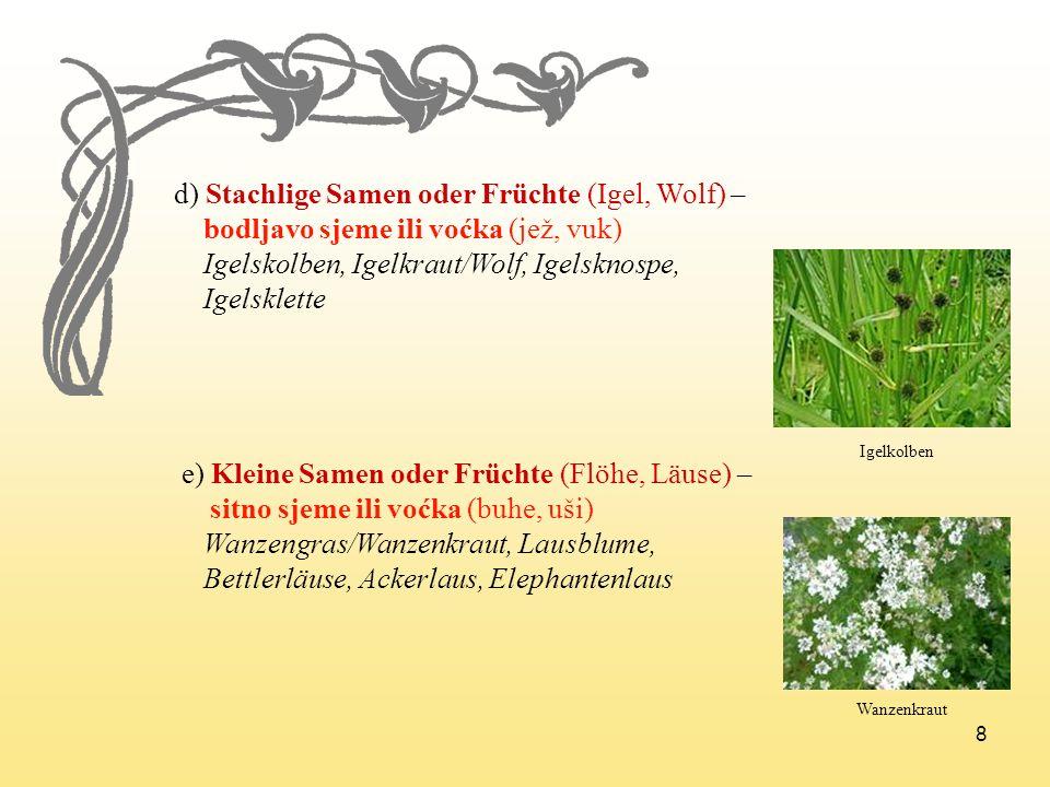 8 d) Stachlige Samen oder Früchte (Igel, Wolf) – bodljavo sjeme ili voćka (jež, vuk) Igelskolben, Igelkraut/Wolf, Igelsknospe, Igelsklette e) Kleine S