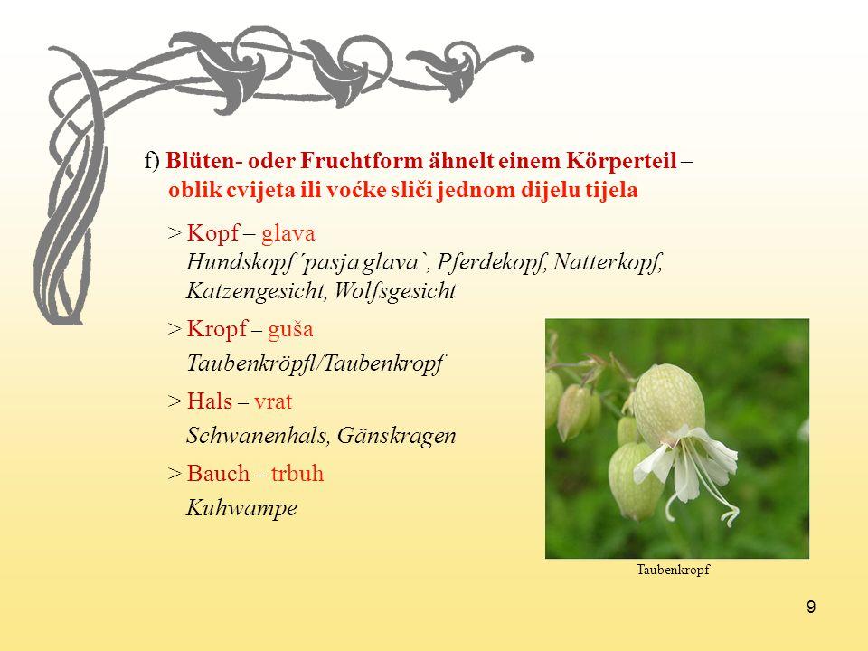 9 f) Blüten- oder Fruchtform ähnelt einem Körperteil – oblik cvijeta ili voćke sliči jednom dijelu tijela > Kopf – glava Hundskopf ´pasja glava`, Pfer