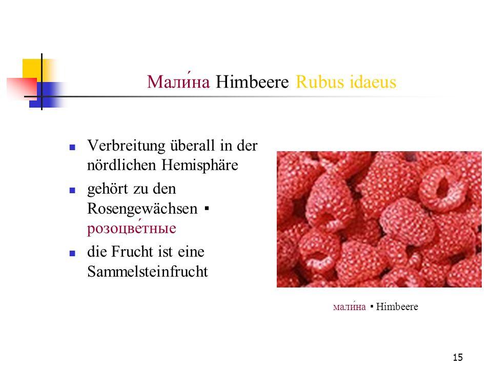 15 Mали́на Himbeere Rubus idaeus Verbreitung überall in der nördlichen Hemisphäre gehört zu den Rosengewächsen розоцветные die Frucht ist eine Sammels