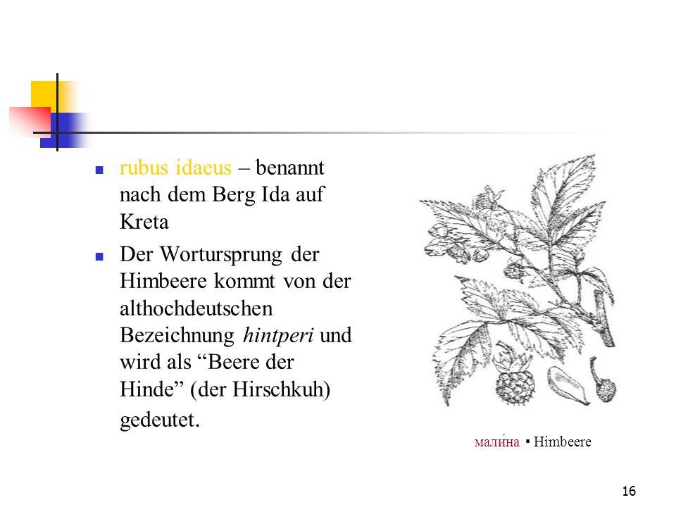 16 rubus idaeus – benannt nach dem Berg Ida auf Kreta Der Wortursprung der Himbeere kommt von der althochdeutschen Bezeichnung hintperi und wird als B