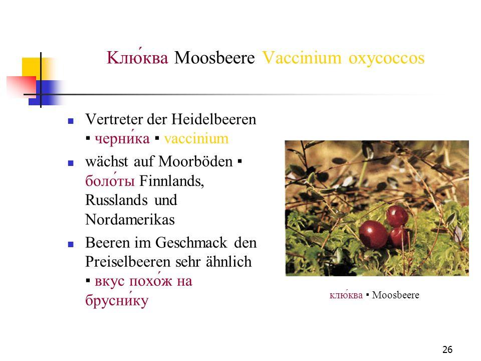 26 Kлюква Moosbeere Vaccinium oxycoccos Vertreter der Heidelbeeren черника vaccinium wächst auf Moorböden болоты Finnlands, Russlands und Nordamerikas
