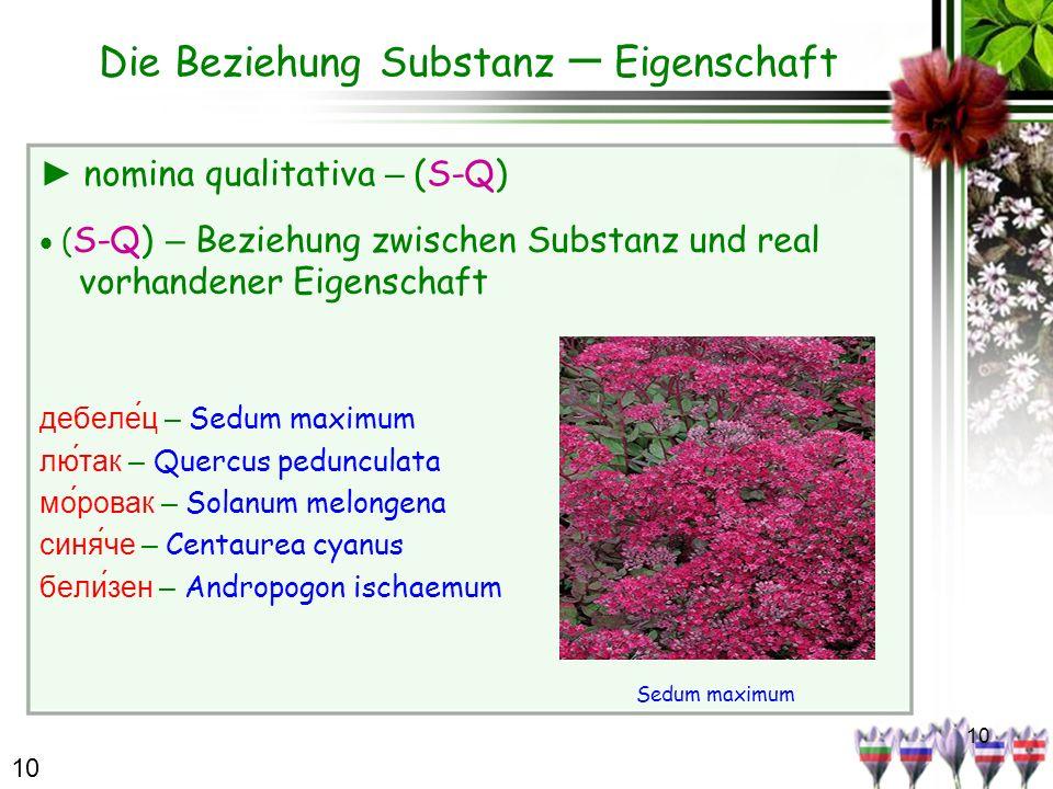10 Die Beziehung Substanz – Eigenschaft nomina qualitativa – (S-Q) ( S-Q) – Beziehung zwischen Substanz und real vorhandener Eigenschaft дебеле́ц – Se