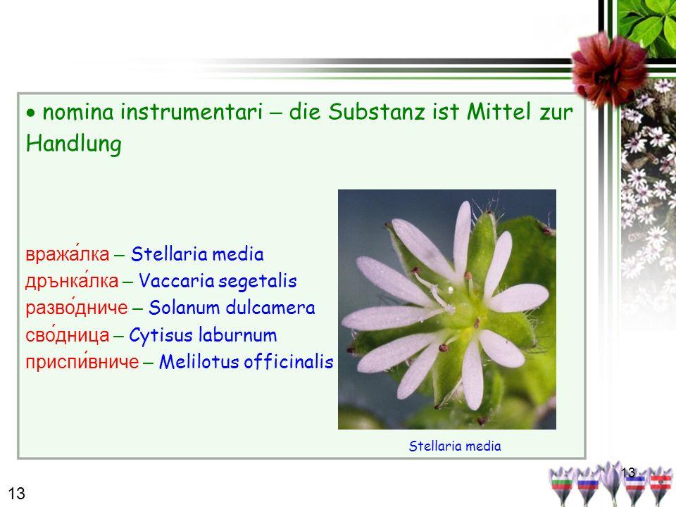 13 nomina instrumentari – die Substanz ist Mittel zur Handlung вража́лка – Stellaria media дрънкалка – Vaccaria segetalis разво́дниче – Solanum dulcam