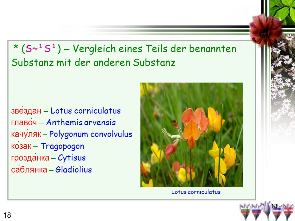 18 * (S~¹S¹) – Vergleich eines Teils der benannten Substanz mit der anderen Substanz зве́здан – Lotus corniculatus главо́ч – Anthemis arvensis качуляк