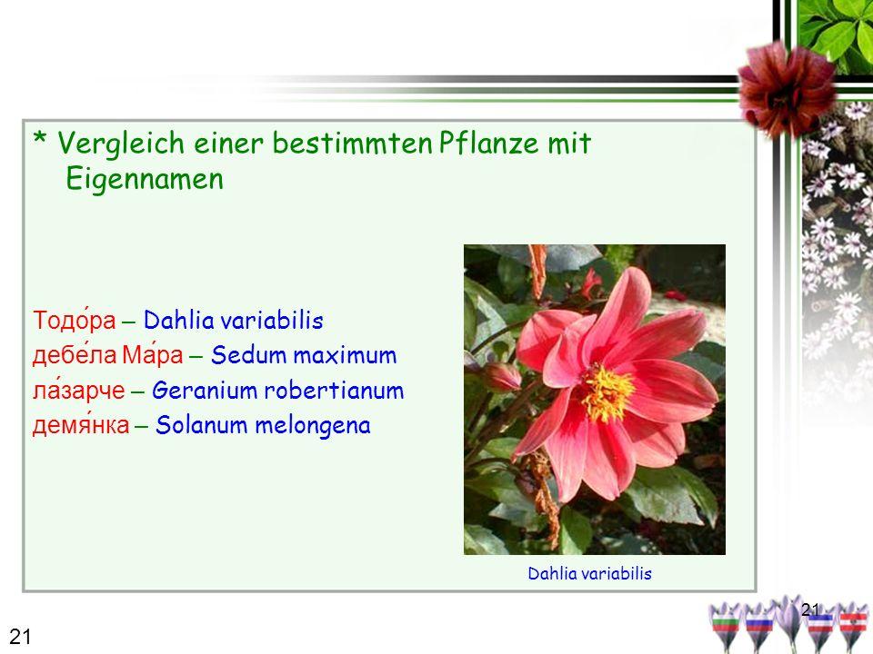 21 * Vergleich einer bestimmten Pflanze mit Eigennamen Тодо́ра – Dahlia variabilis дебе́ла Ма́ра – Sedum maximum лазарче – Geranium robertianum демянка – Solanum melongena Dahlia variabilis 21