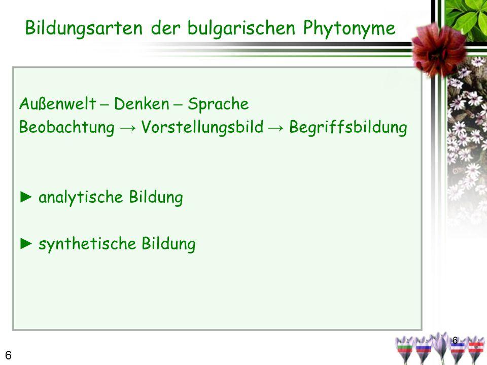 6 Bildungsarten der bulgarischen Phytonyme Außenwelt – Denken – Sprache Beobachtung Vorstellungsbild Begriffsbildung analytische Bildung synthetische Bildung 6