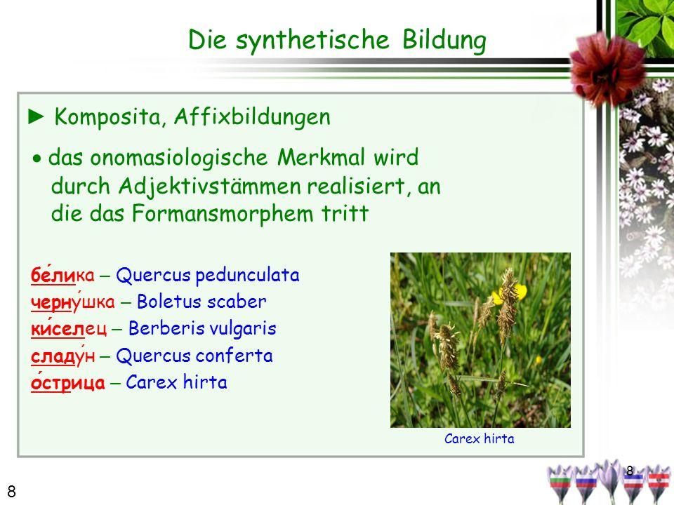 8 Die synthetische Bildung Komposita, Affixbildungen das onomasiologische Merkmal wird durch Adjektivstämmen realisiert, an die das Formansmorphem tri