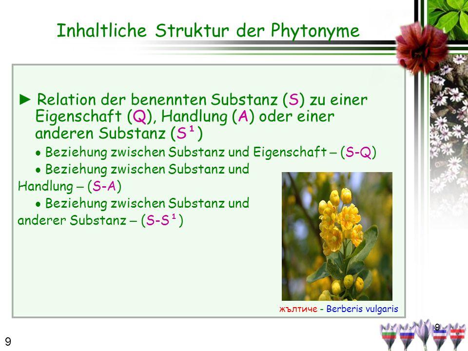 9 Inhaltliche Struktur der Phytonyme Relation der benennten Substanz (S) zu einer Eigenschaft (Q), Handlung (A) oder einer anderen Substanz (S¹) Bezie