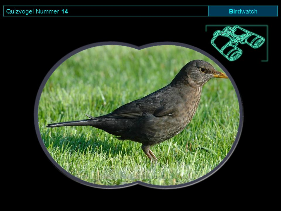 Quizvogel Nummer 14Birdwatch
