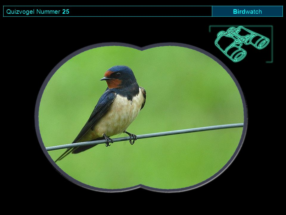 Quizvogel Nummer 25Birdwatch