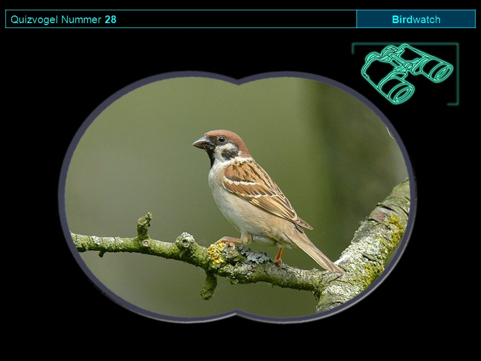 Quizvogel Nummer 28Birdwatch