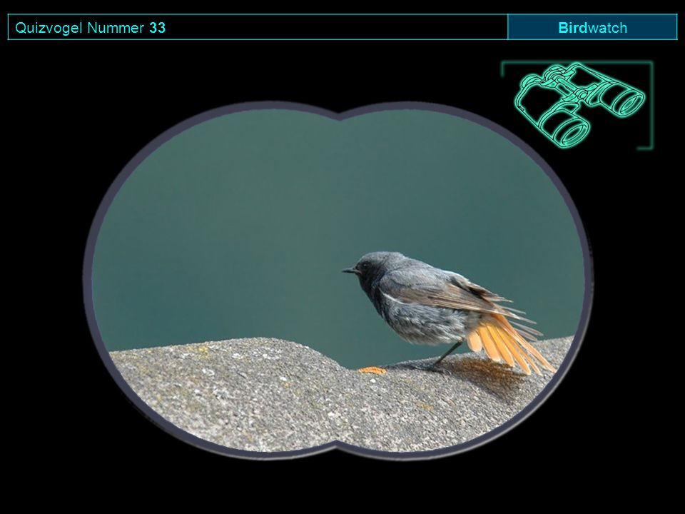 Quizvogel Nummer 33Birdwatch